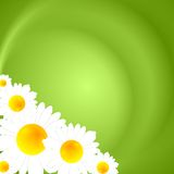 绿色夏天自然背景 免版税库存照片