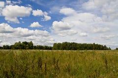 绿色夏天草甸和明亮的云彩 免版税库存照片