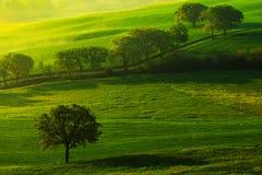 绿色夏天草甸风景 在领域的夏天 多小山农田田园诗看法在美好的早晨光的,意大利托斯卡纳 库存照片