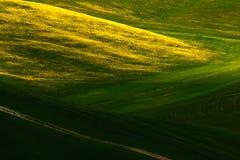 绿色夏天草甸风景 在领域的夏天 多小山农田田园诗看法在美好的早晨光的,意大利托斯卡纳 免版税库存图片