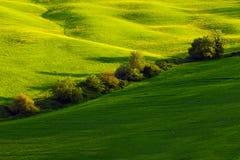 绿色夏天草甸风景 在领域的夏天 多小山农田dyllic看法在美好的早晨光的,意大利托斯卡纳 L 免版税库存图片
