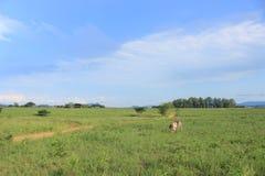 绿色夏天风景和斑马在Mlilwane野生生物保护区在斯威士兰,南非 免版税库存图片
