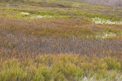 黄色多刺的杂草作为背景 图库摄影