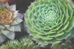 绿色多汁植物庭院 免版税图库摄影