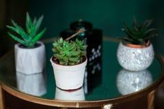 绿色多汁植物,在白色现代花瓶,玻璃桌面 免版税图库摄影
