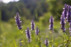 紫色多种花色鲜明之植物大草原野花 免版税库存图片