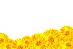 黄色大丁草框架 库存图片