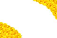 黄色大丁草框架 免版税图库摄影