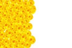 黄色大丁草框架 库存照片
