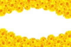 黄色大丁草框架 免版税库存照片