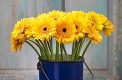 黄色大丁草雏菊花束在蓝色桶的 库存照片