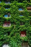绿色大厦盖了常春藤 免版税图库摄影