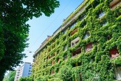 绿色大厦盖了常春藤 免版税库存照片