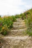 绿色大阳台地面台阶步走道 库存照片
