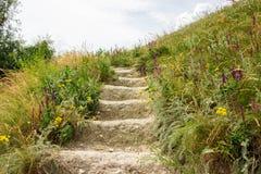 绿色大阳台地面台阶步走道 免版税图库摄影