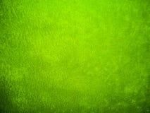 绿色天鹅绒衣裳 免版税库存图片