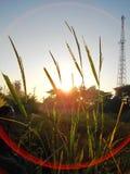 黄色太阳是领域 免版税图库摄影