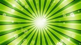 绿色太阳爆炸花 图库摄影