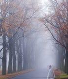 紫色夹克的一名妇女走在一条街道上的在一个有雾的11月早晨 免版税库存照片