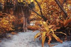 黄色密林风景 免版税库存照片