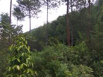 绿色密林 库存图片