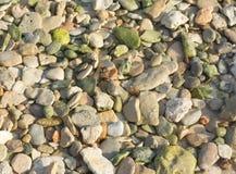绿色小卵石岩石 免版税库存照片