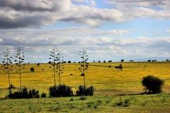 黄色小山多云天空 库存图片