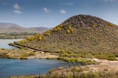 黄色小点- poui在绽放的poui树 库存照片