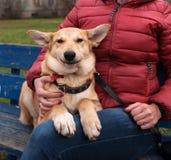 黄色小狗和微笑坐长凳在女主人旁边 免版税库存照片