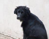 黑色小狗 免版税库存照片