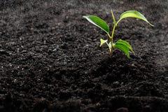 绿色小的植物 免版税库存图片