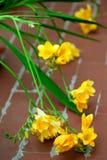 黄色小苍兰 免版税图库摄影