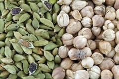 绿色小豆蔻和圆的暹罗豆蔻果实 图库摄影