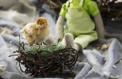 黄色小鸡 免版税图库摄影