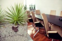 绿色尖刻的植物在一个空的办公室,会议室 库存图片