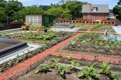 绿色屋顶 库存图片