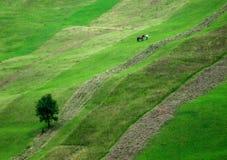 绿色山坡 免版税库存照片