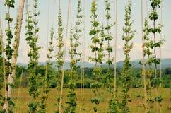 绿色山状态 库存图片