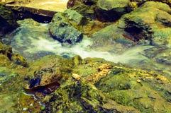 绿色岩石的微型河 库存照片