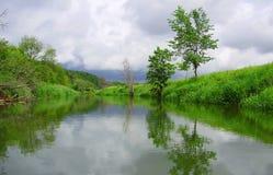 绿色岸的反射 库存照片