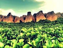 绿色峡谷 免版税库存照片