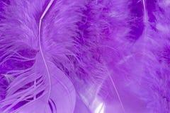 紫色工艺羽毛 库存图片