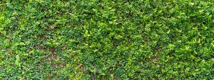 绿色布什无缝的Tileable纹理 图库摄影