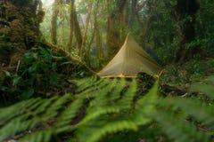 绿色帐篷在热带密林, Kao Luang, Nakhon Si Thammarat, T 免版税库存照片