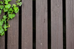 绿色常春藤和木头纹理 库存照片