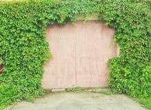 绿色常春藤墙壁 免版税图库摄影