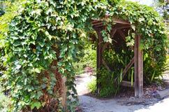 绿色常春藤覆盖的拱道 免版税图库摄影