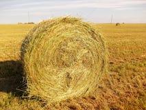 黄色干草卷在领域的 免版税图库摄影