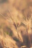 黄色干草在沙漠 库存照片