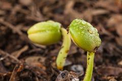 绿色幼木 免版税图库摄影
